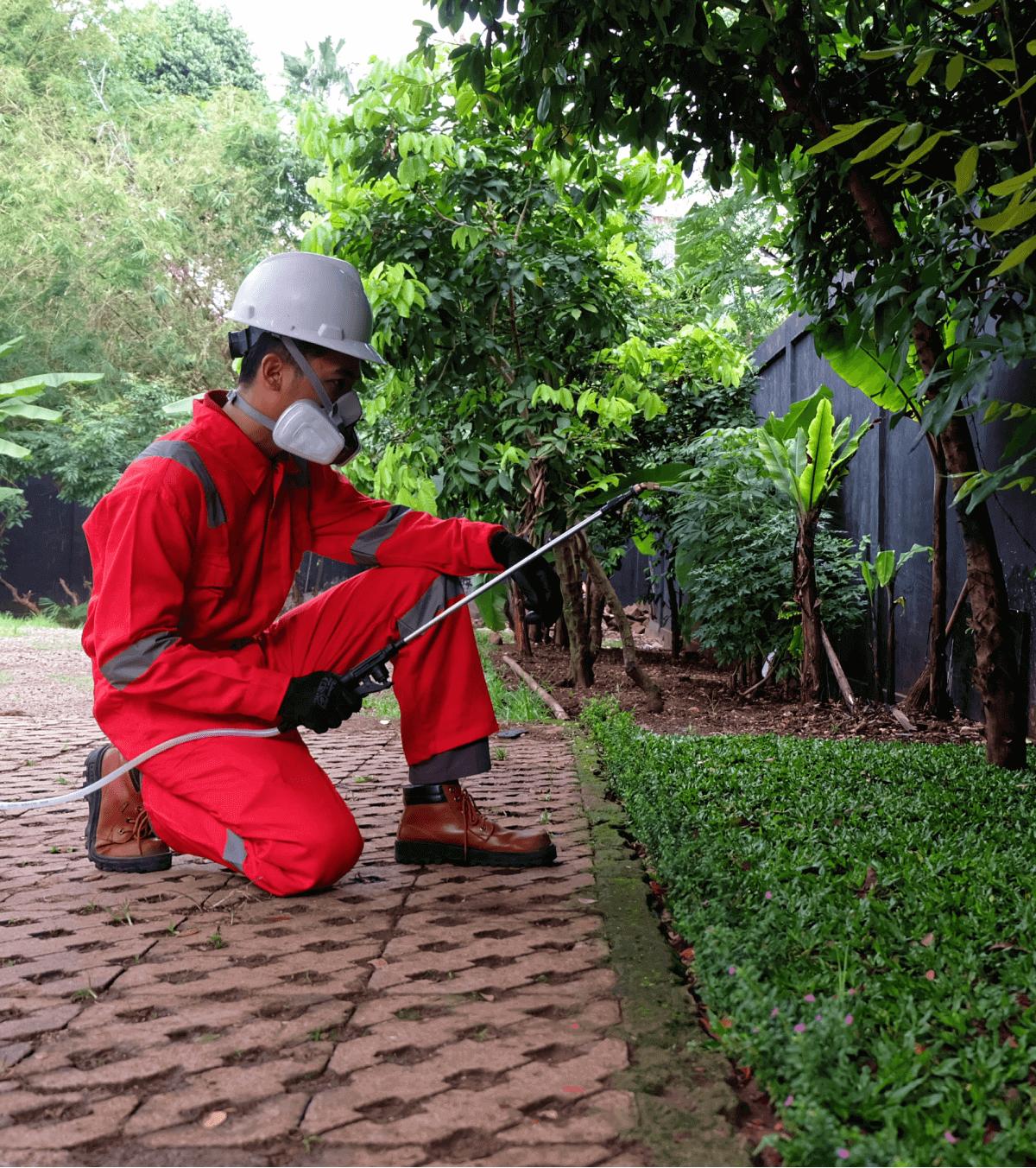 Anti Rayap Jakarta layanan img